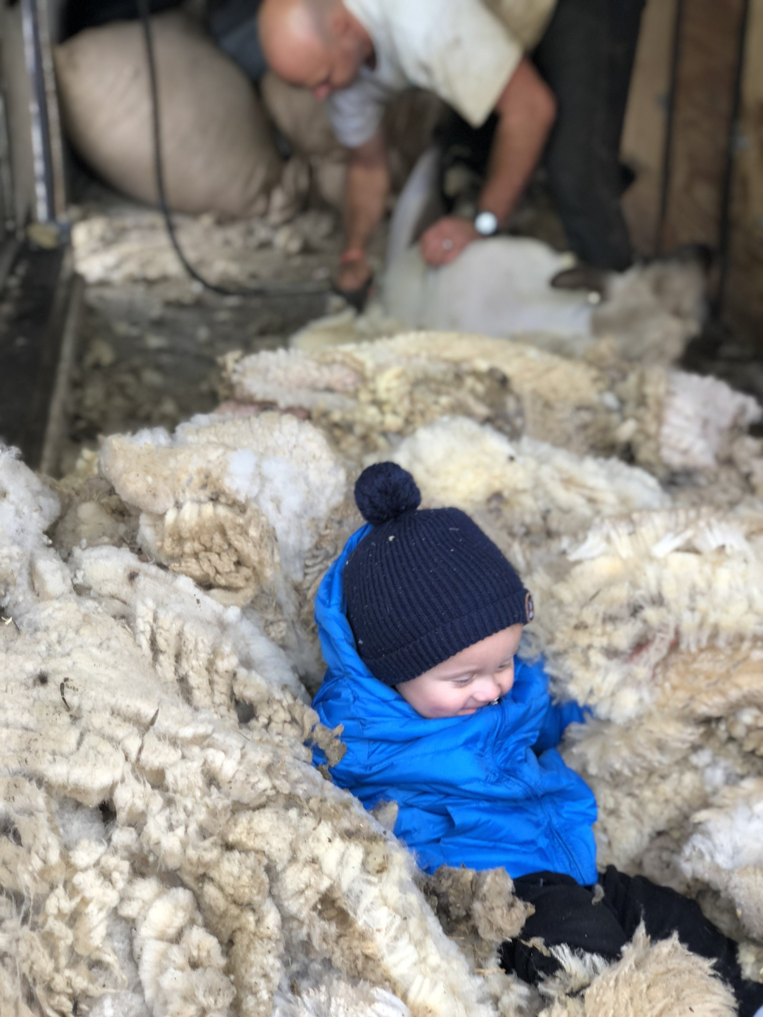 Fall Shearing