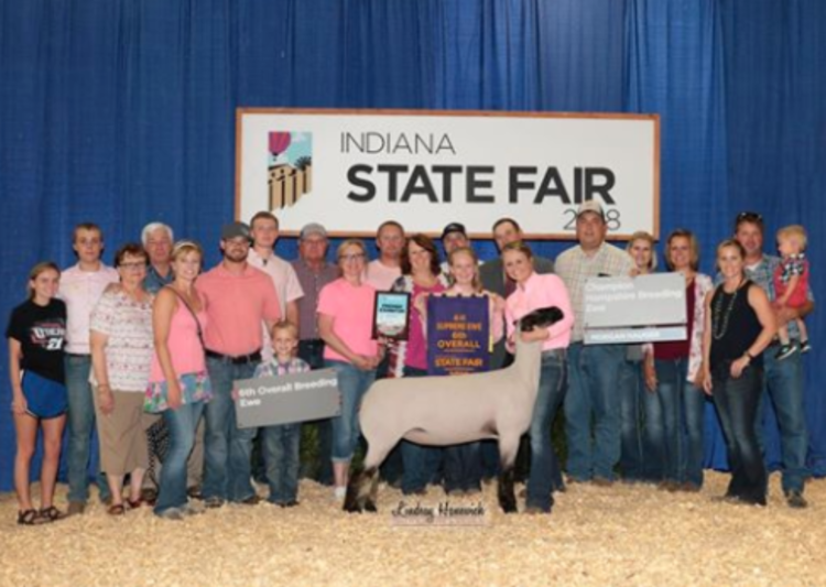 NEW SHORTER SALE FORMAT for March 14th EWE LAMB sale! — Poe Hamps