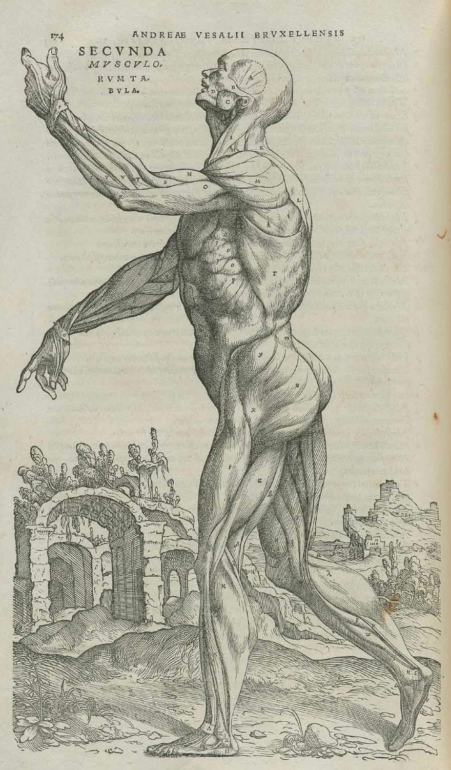 Vesalius Vanitas Dissected.jpg