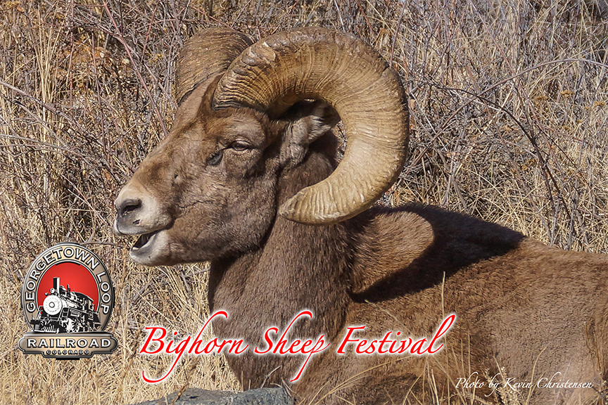This stunning photo of a bighorn sheep symbolizes the festival held in Georgetown every year. Held on November 12, visitors to the llop can take a lovely train ride and visit with the Colorado Division of Wildlife to hear all about the animal that makes its home in the Rocky Mountains and Clear Creek County.