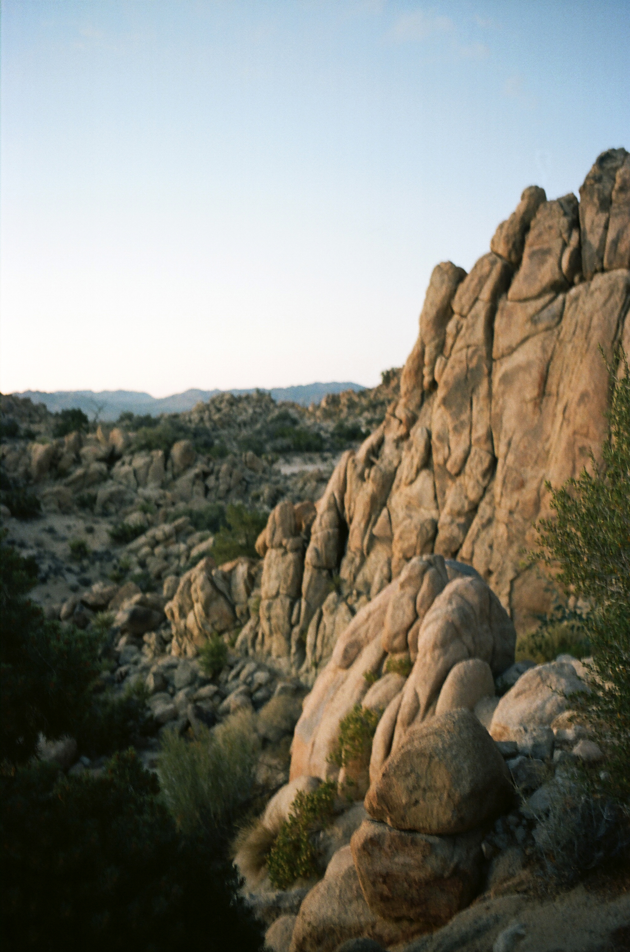 AliceDison_YuccaValley06.jpg