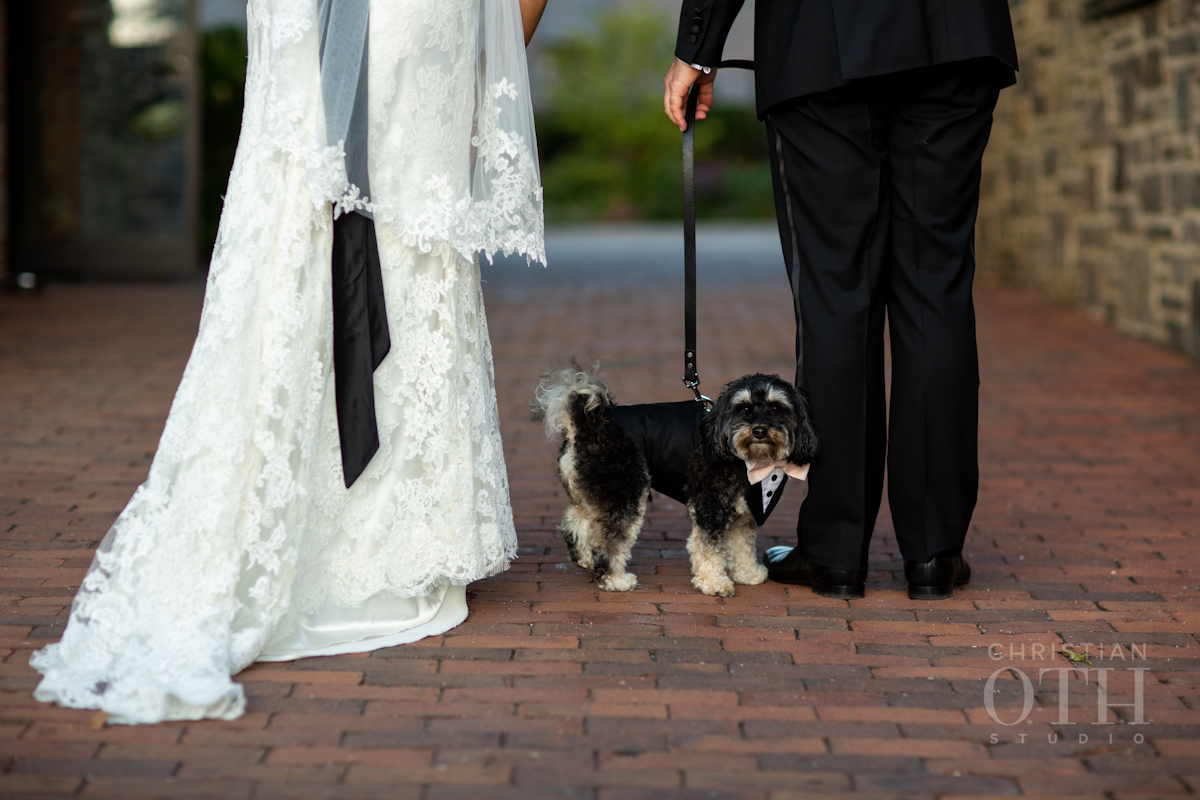 Wedding dog in tuxedo at Blue Hill at Stone Barns