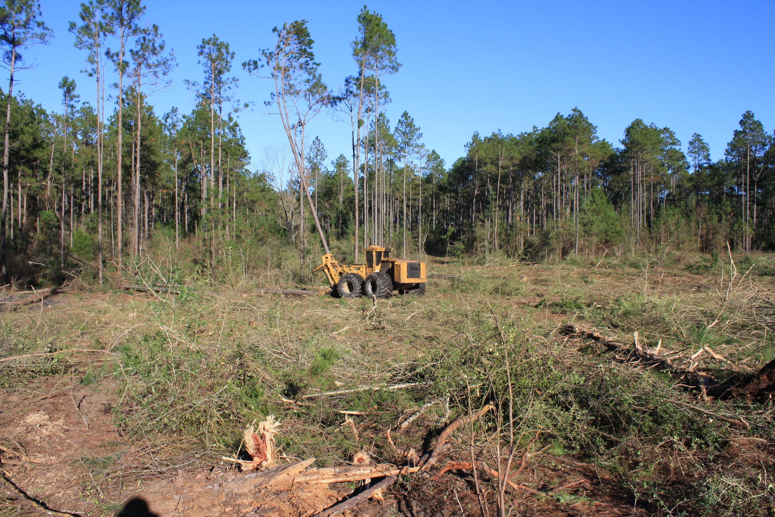 timber-harvest.JPG