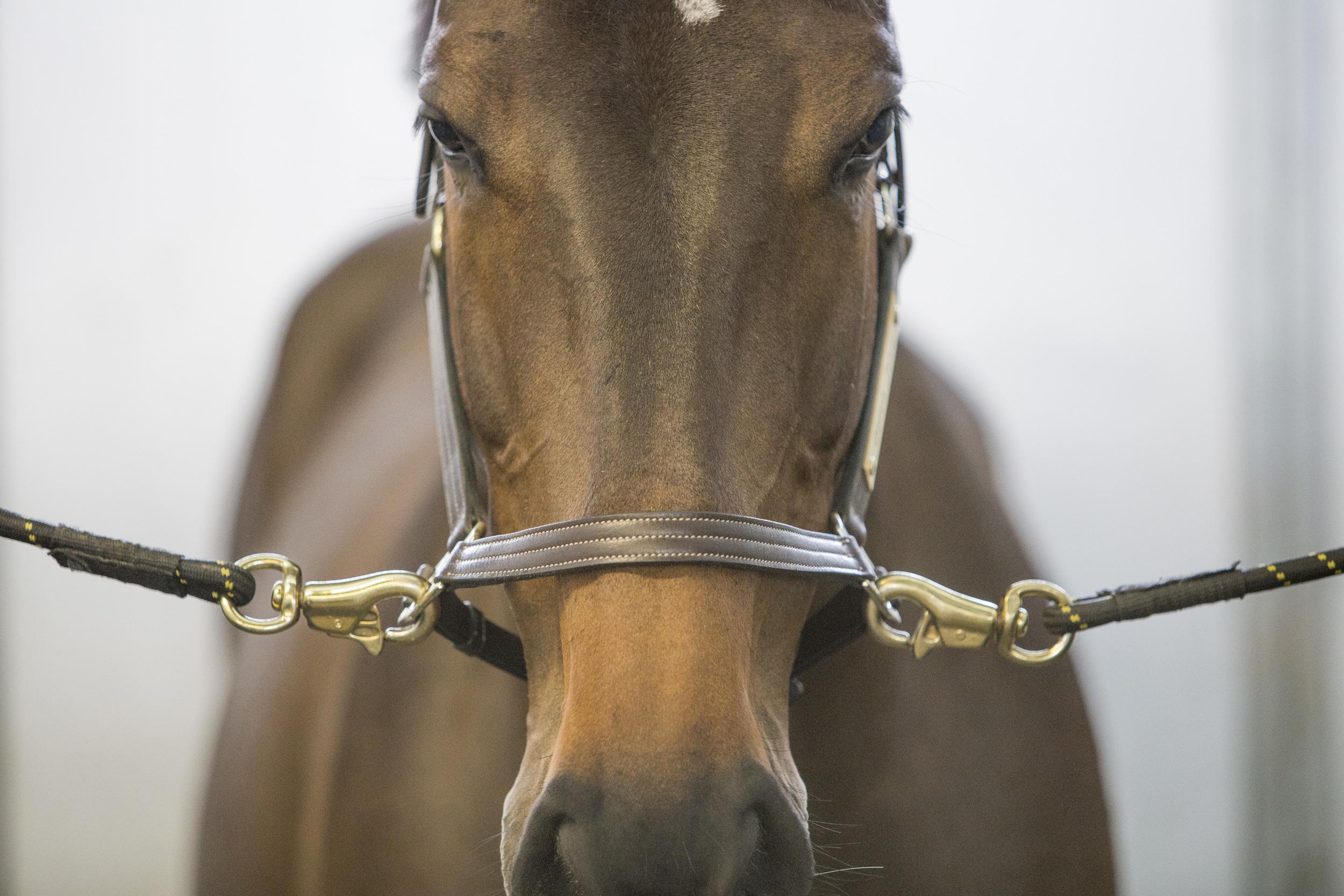 Horse Shackles1.jpg