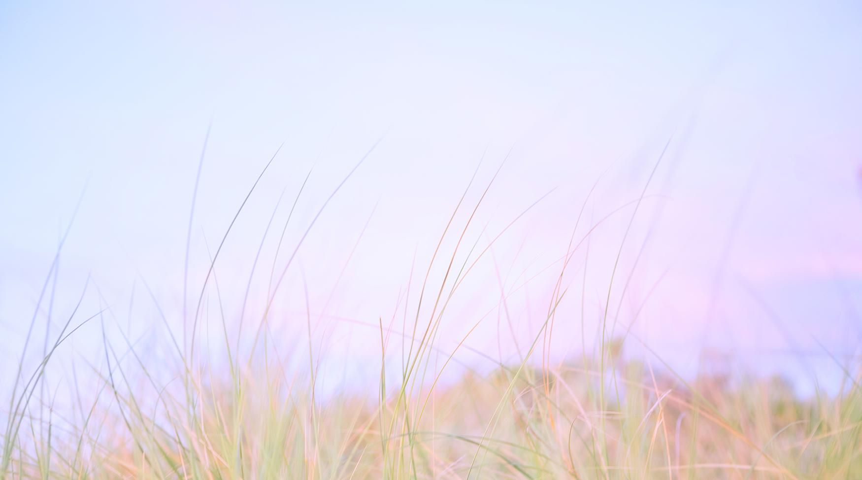 JohnWoodhouseArt_Landscape_Evening Beach Grass.jpg