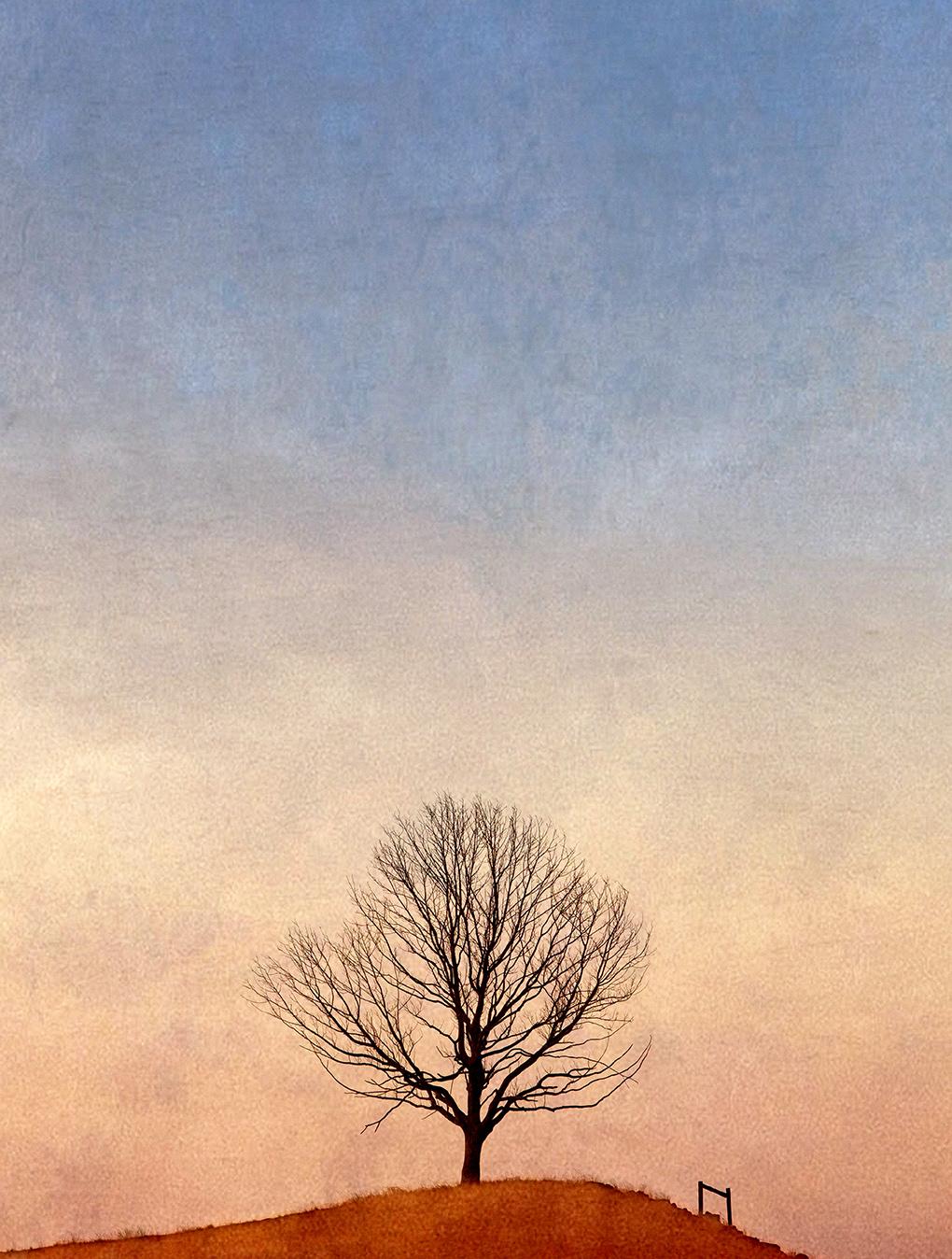 JohnWoodhouseArt_Landscape_All Alone V1.jpg