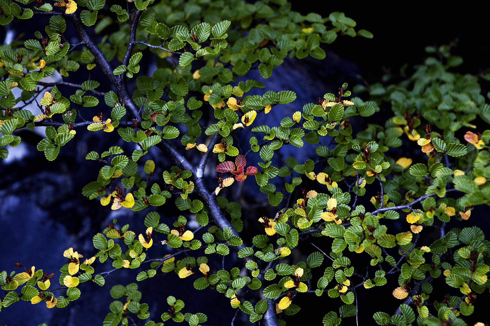 JohnWoodhouseArt_Landscape_IMG_3191.jpg
