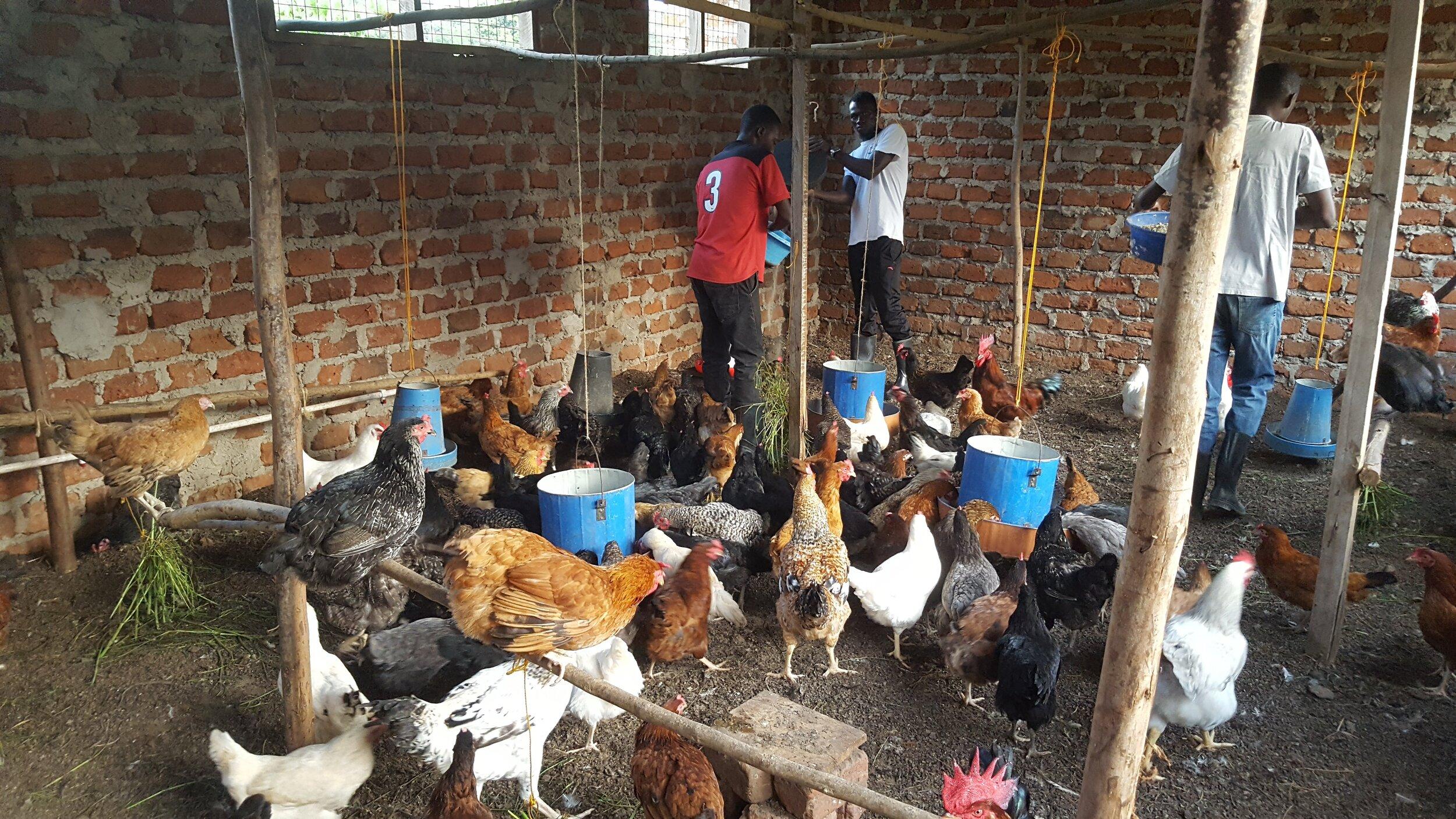 - Chicken Farming  - Small Animal Farming  - Amani Barber Shop  - Joyful House of Refuge