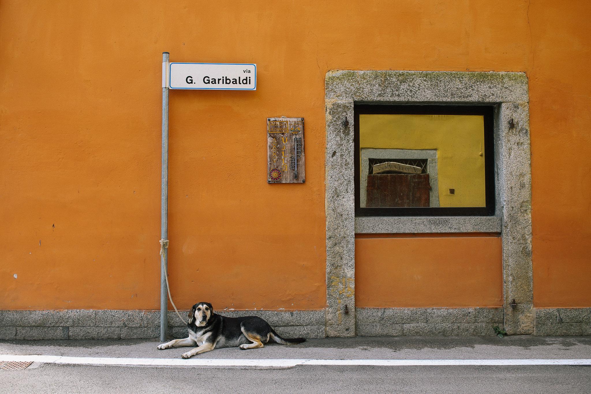 Ledro-dog.jpg