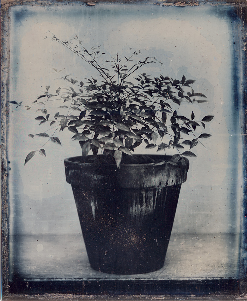 Potted Plant IV