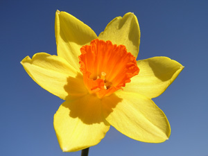 Easter weekend opening times for Everyday Yoga and Bristol Yoga Centre