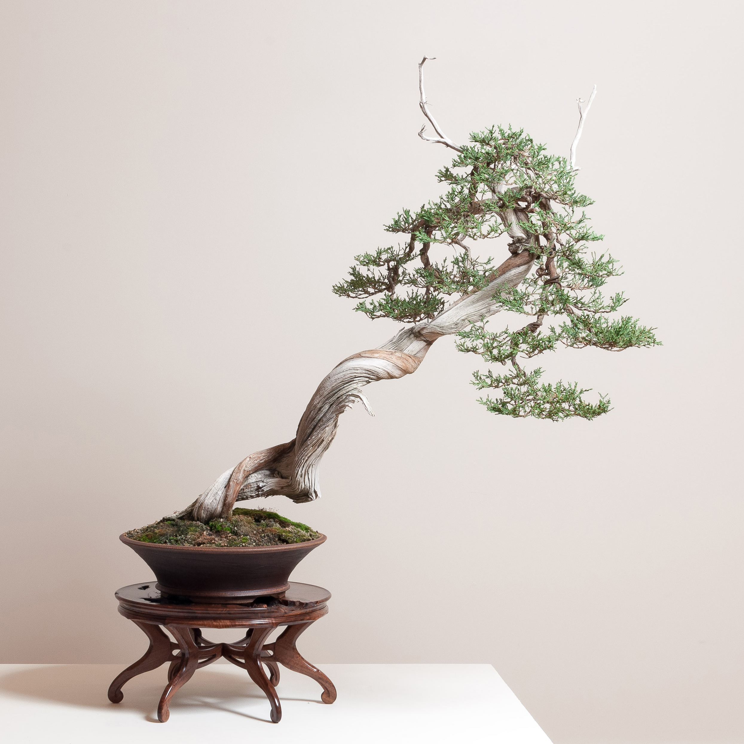 Round Stand with Rocky Mountain Juniper