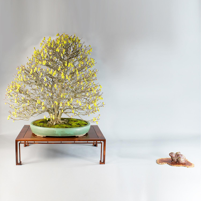 Mahogany stand, eucalyptus jita.