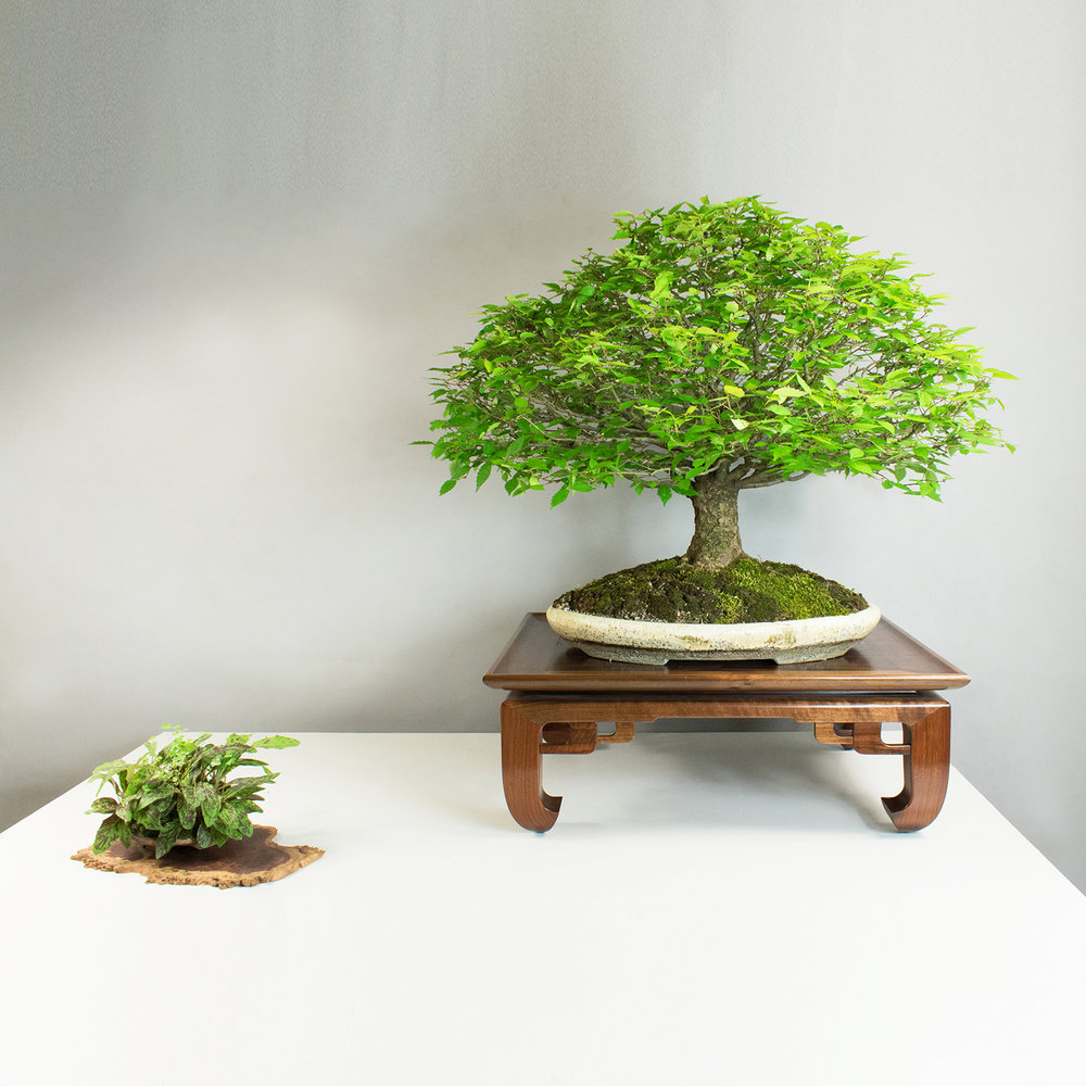 Bonsai Stands Gallery Austin Heitzman Furniture