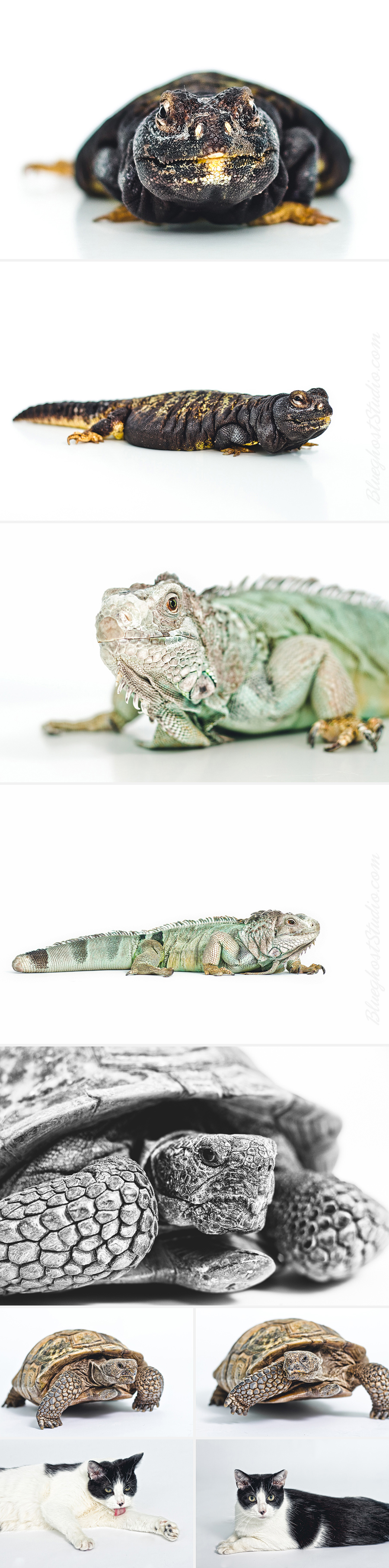 denver-reptile-photographer