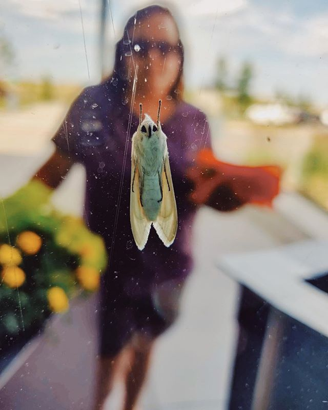 Every time I look at the thumbnail of this image my brain tries to convince me its Angus Young wearing his red velvet blazer and matching knickers with a white shirt and green tie. In reality, Angus is just my way out-of-focus sister standing outside a window with a cute little moth on it.  #realitycheck