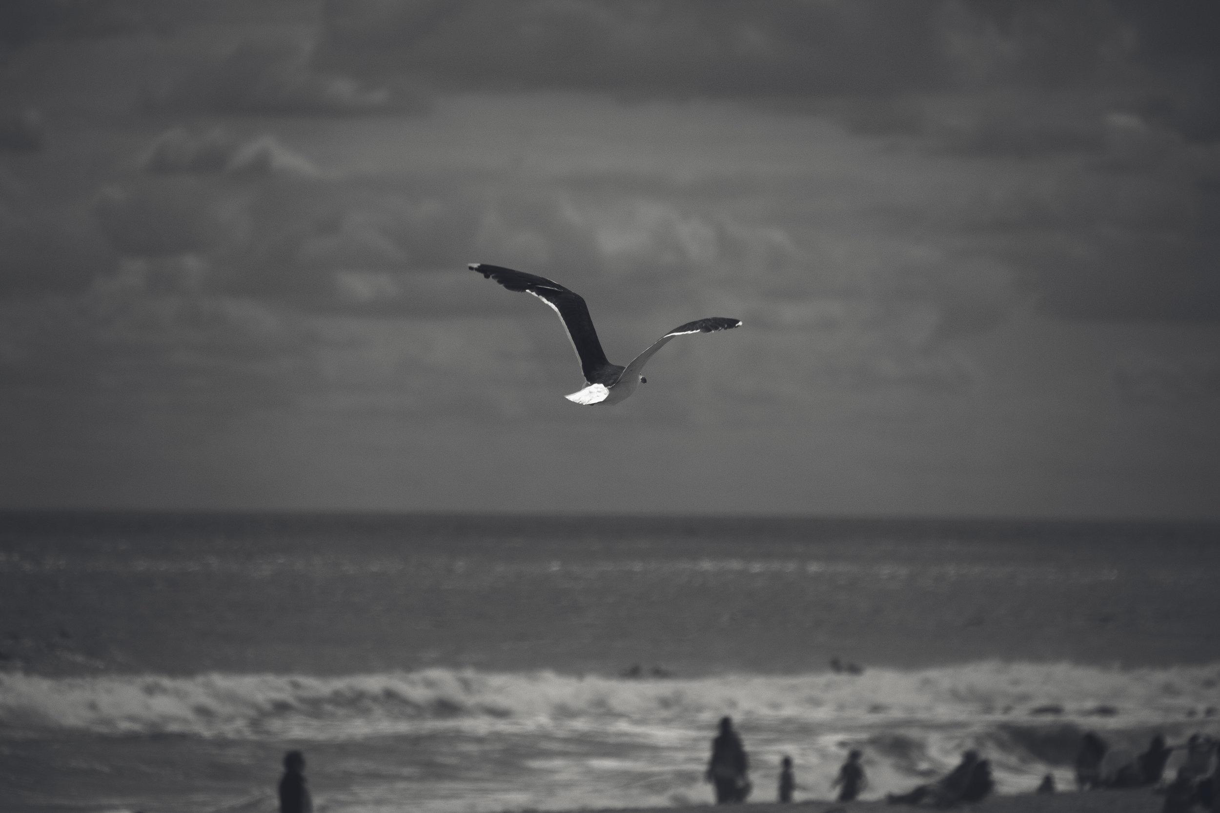 Long Island Beach, New York (USA)