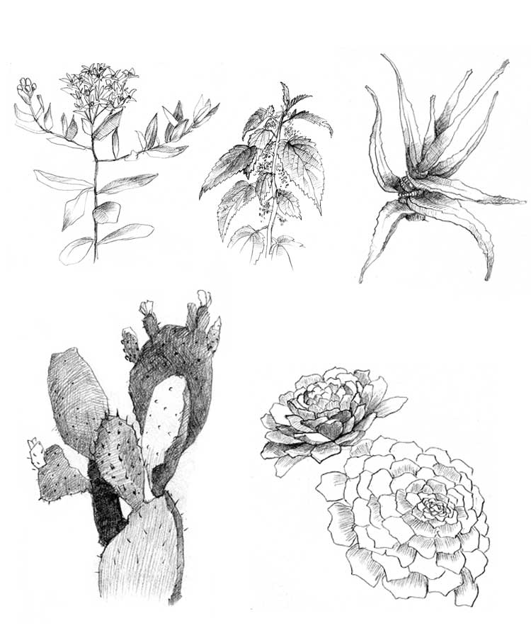 ILLOS_Plants.jpg