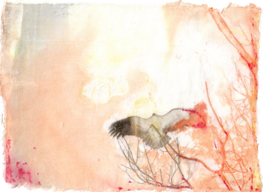 Vulture Sunning (I).jpg