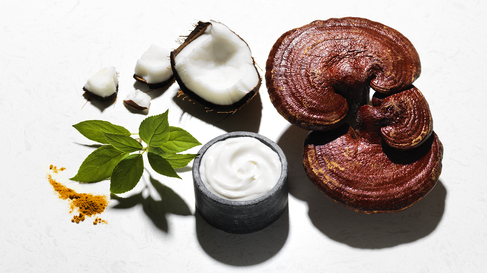 Reishi and Coconut Lotion