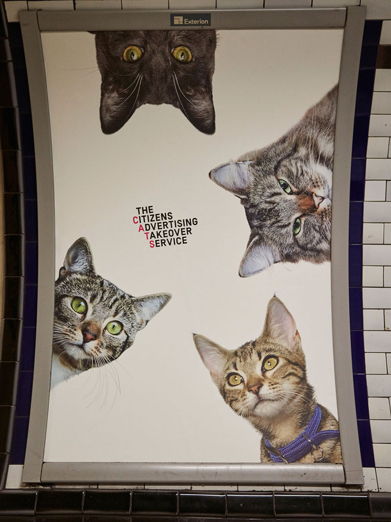 cats-no-ads7.jpg