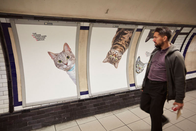 cats-no-ads5.jpg