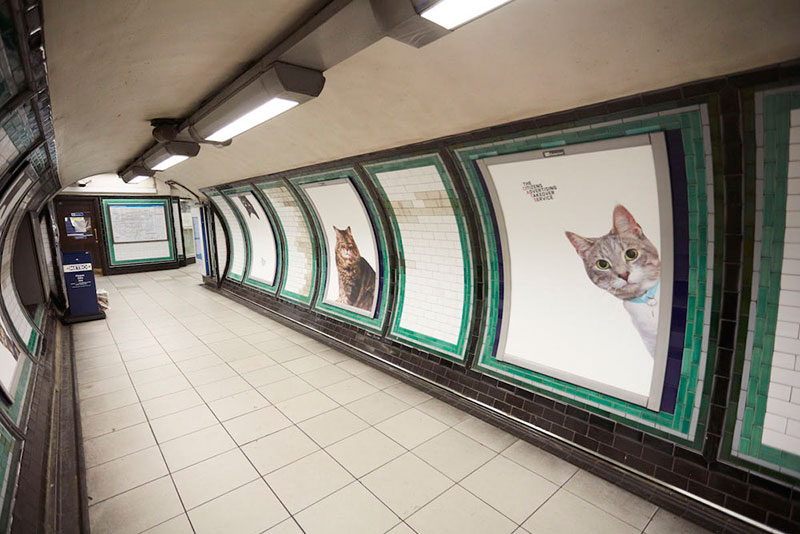 cats-no-ads3.jpg