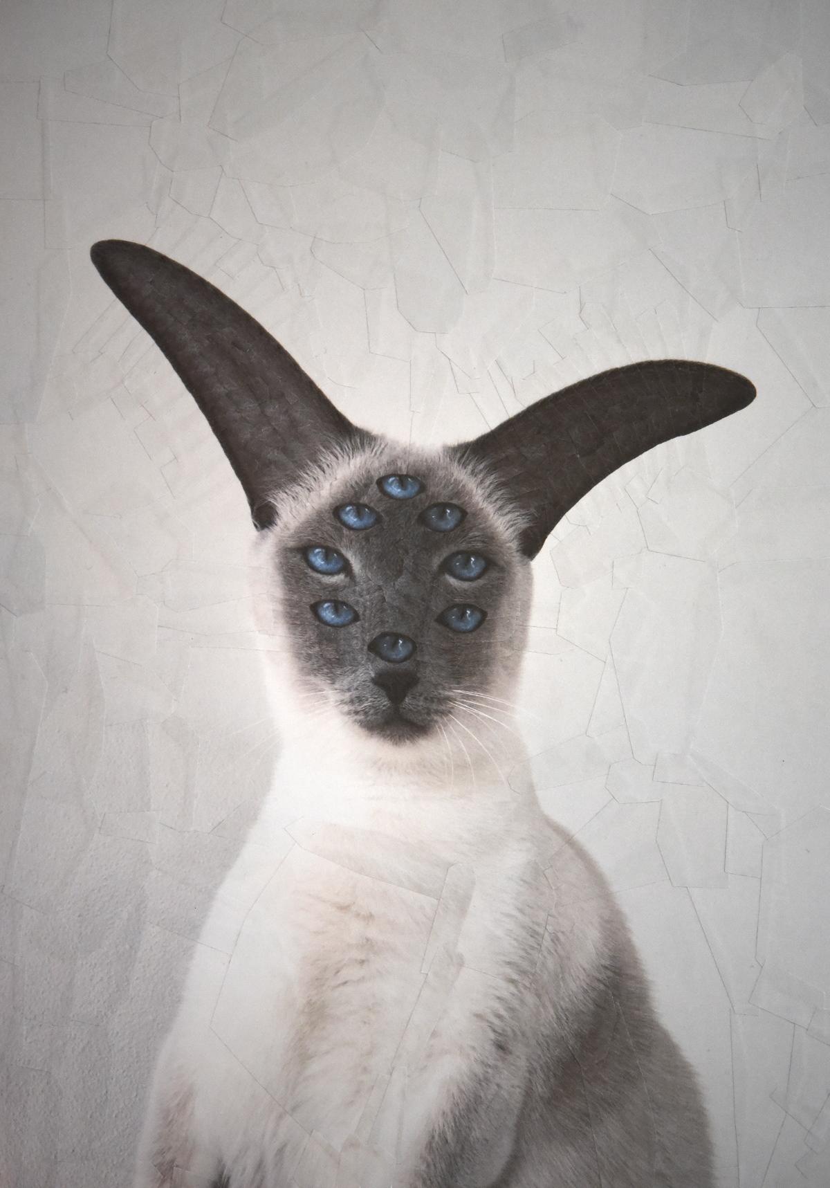 catsdogs1.jpg