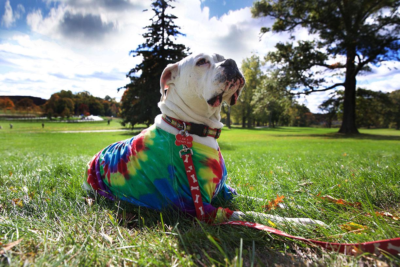 Dog magestic mascot autism speaks.jpg