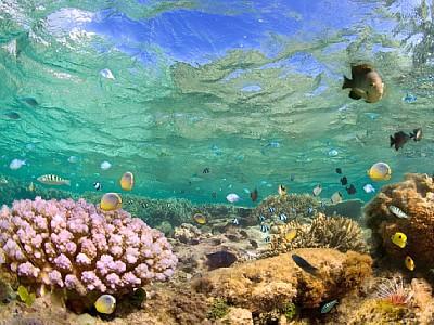 blue-bay-marine-park.jpg