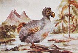 description-dodo-mauritius.jpg