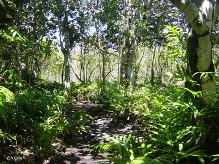 Ebony-forest,-Ile-aux-Aigre.jpg