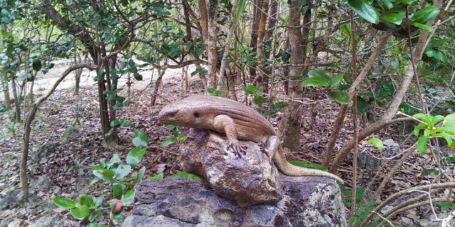 10-mauritius-wild-life-discovery-at-ile-aux-aigrettes (1).jpg