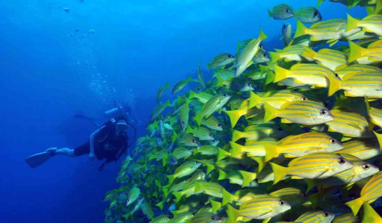 7-scuba-diving-maldives-lux-maldives.jpg.pagespeed.ce.pAJ-rcdkC6.jpg
