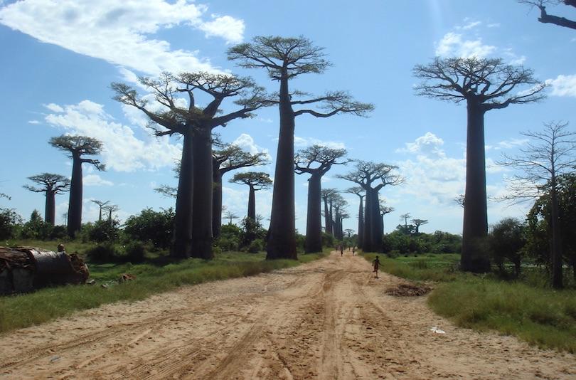 avenue_of_the_baobabs.jpg