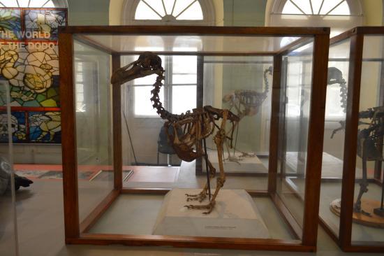 The Dodo bones