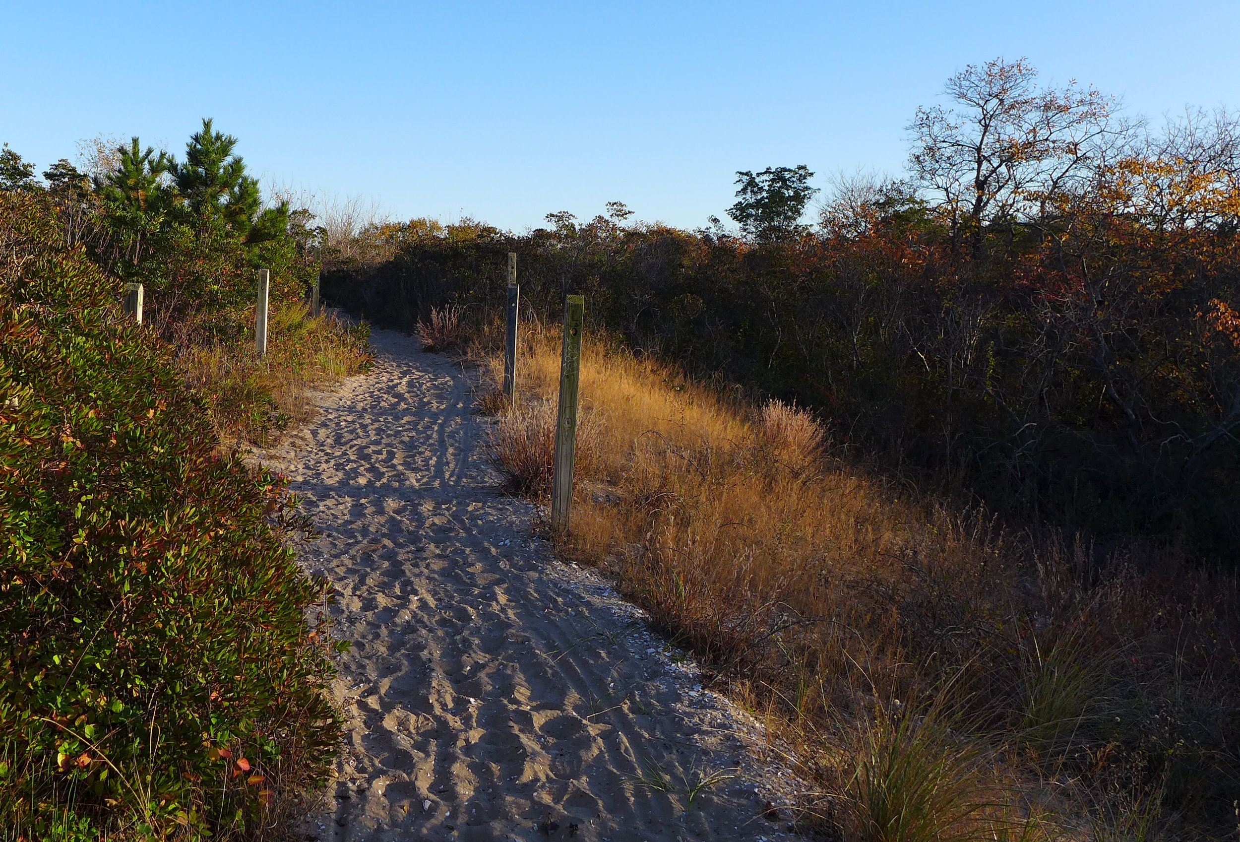 Path Through The Dunes at Ft. Tilden