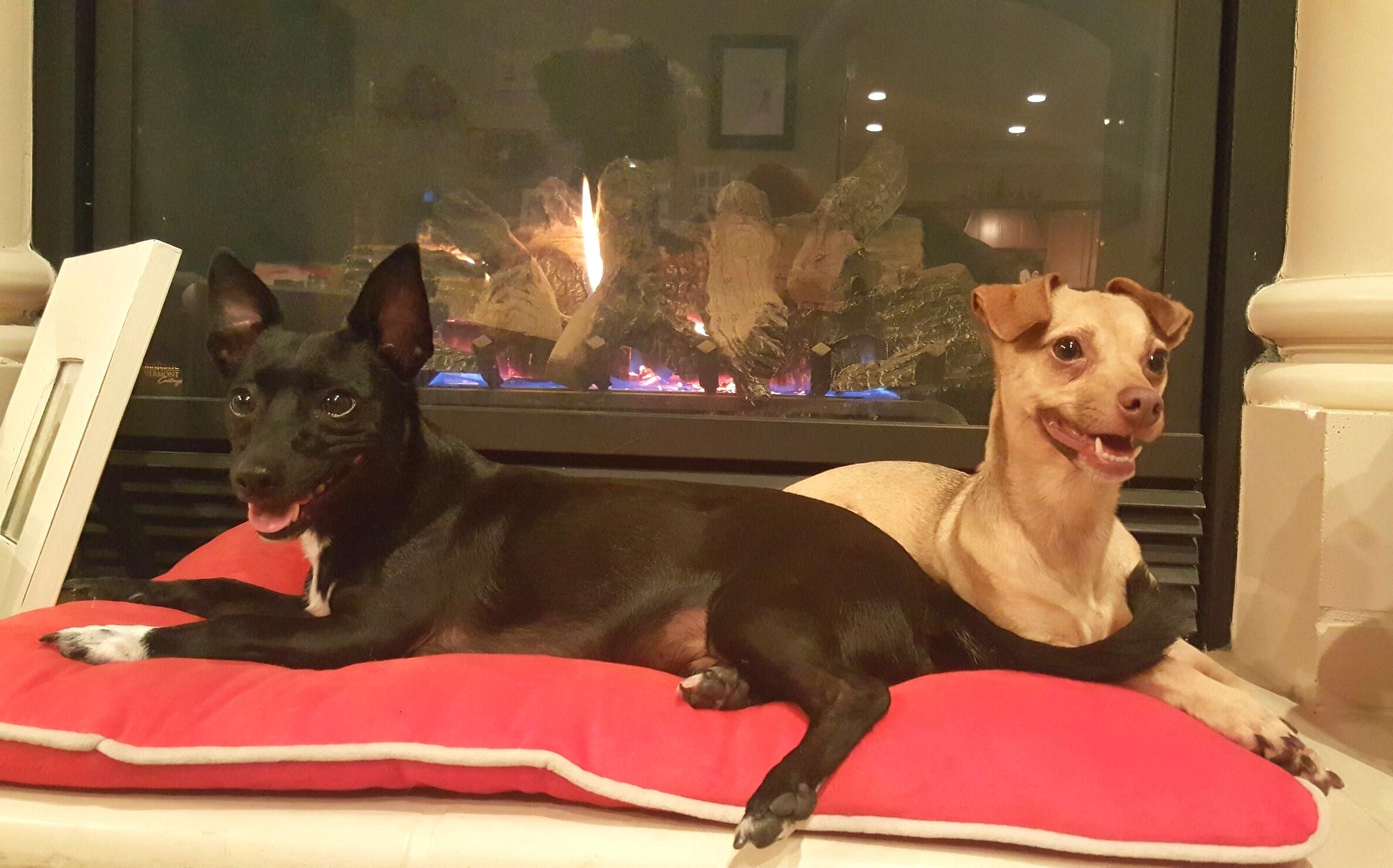 Bixby and Khaleesi
