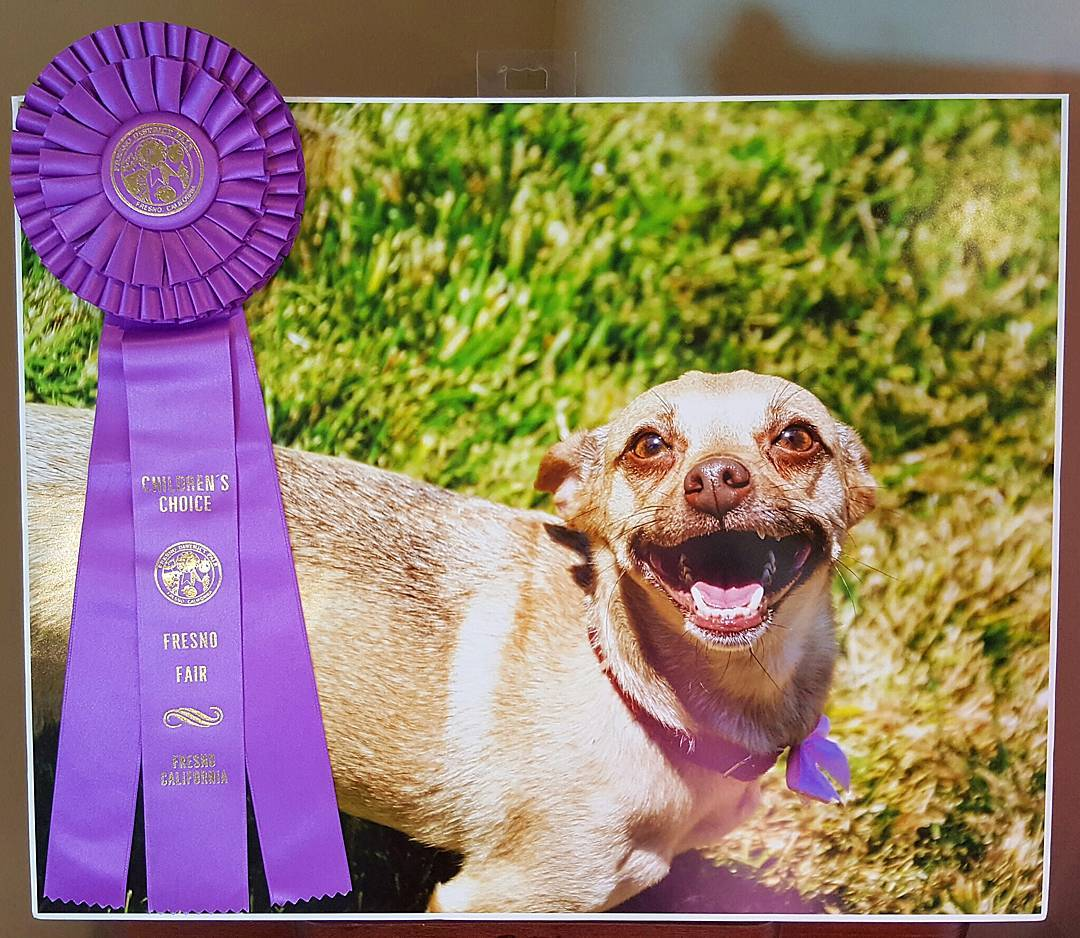 So obsessed with my sweet little Kiki winning the  Children's Choice Award  at the Fresno Fair this year!! Look at the FACE!!