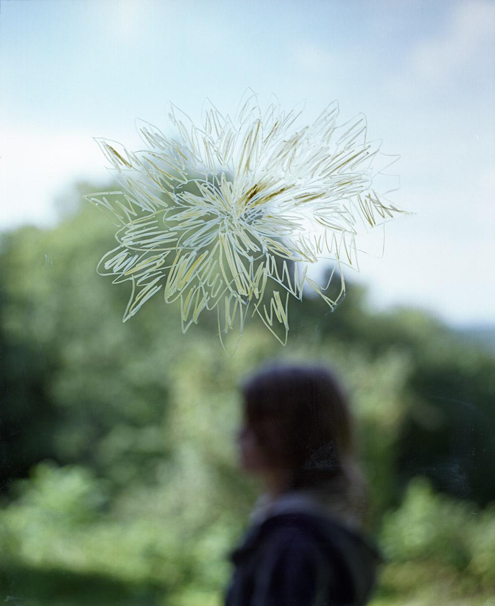 Juliet-Chrysanthamum-profile-v4.jpg