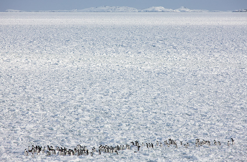 penguin march_06R2710 -ssg-v2C-FINAL-SZ-DU-USM.jpg
