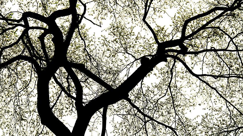 Tree 1-v4.jpg