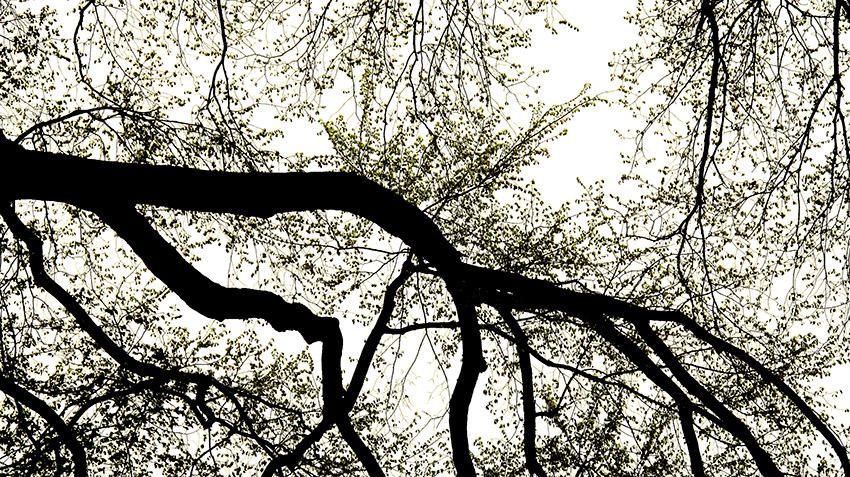 Tree 2-v2.jpg