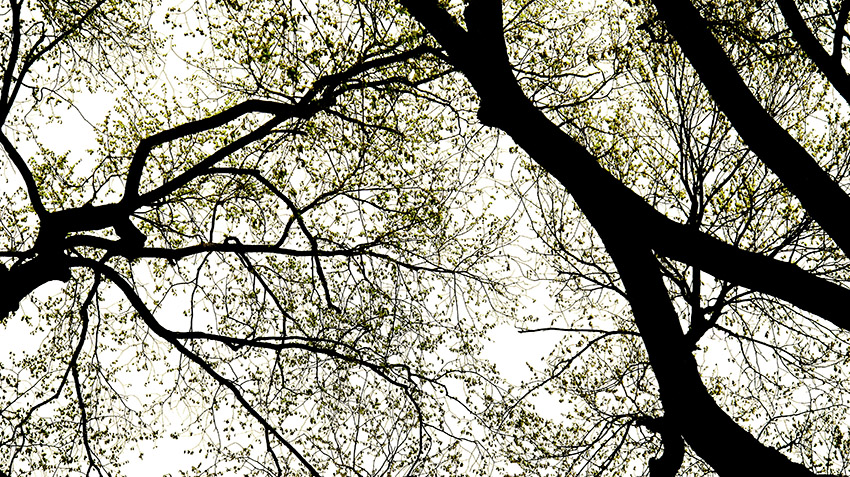 Tree 4-v2.jpg