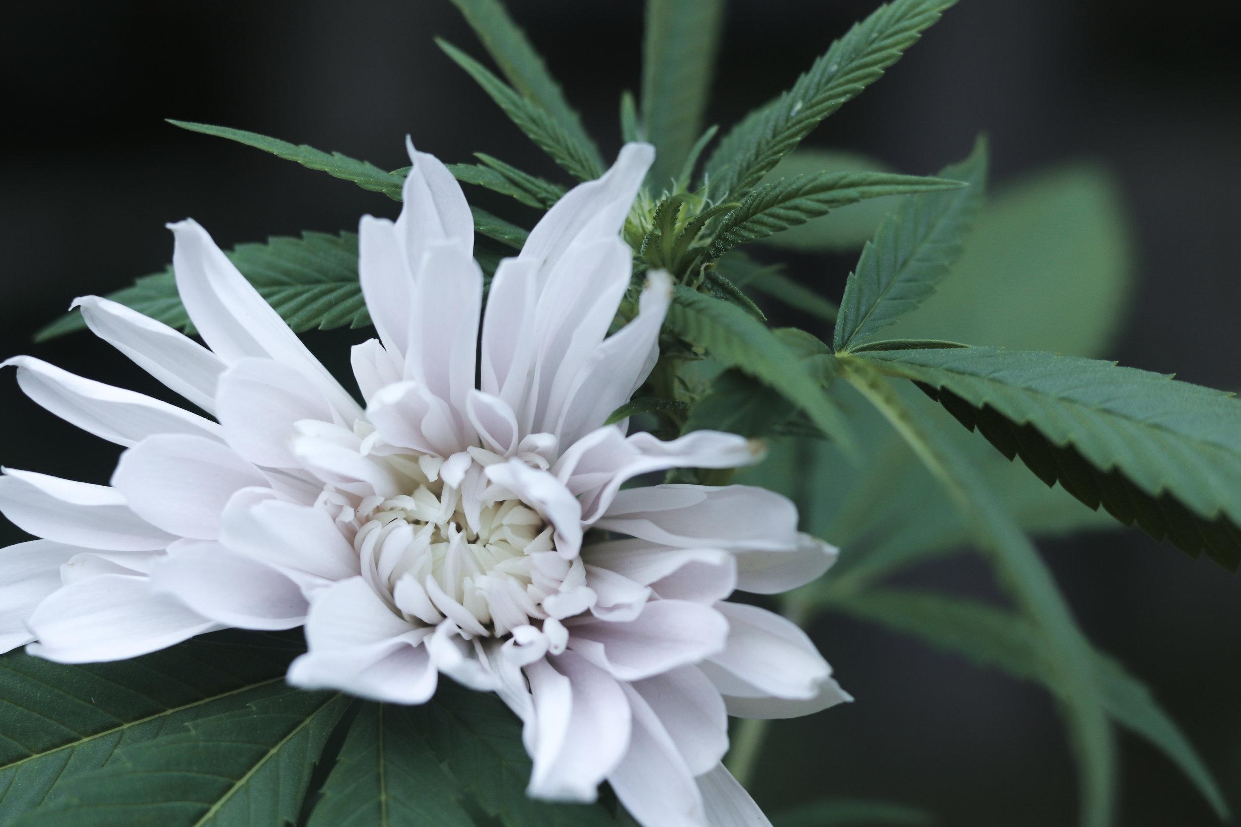 unconventional bloomz.jpg