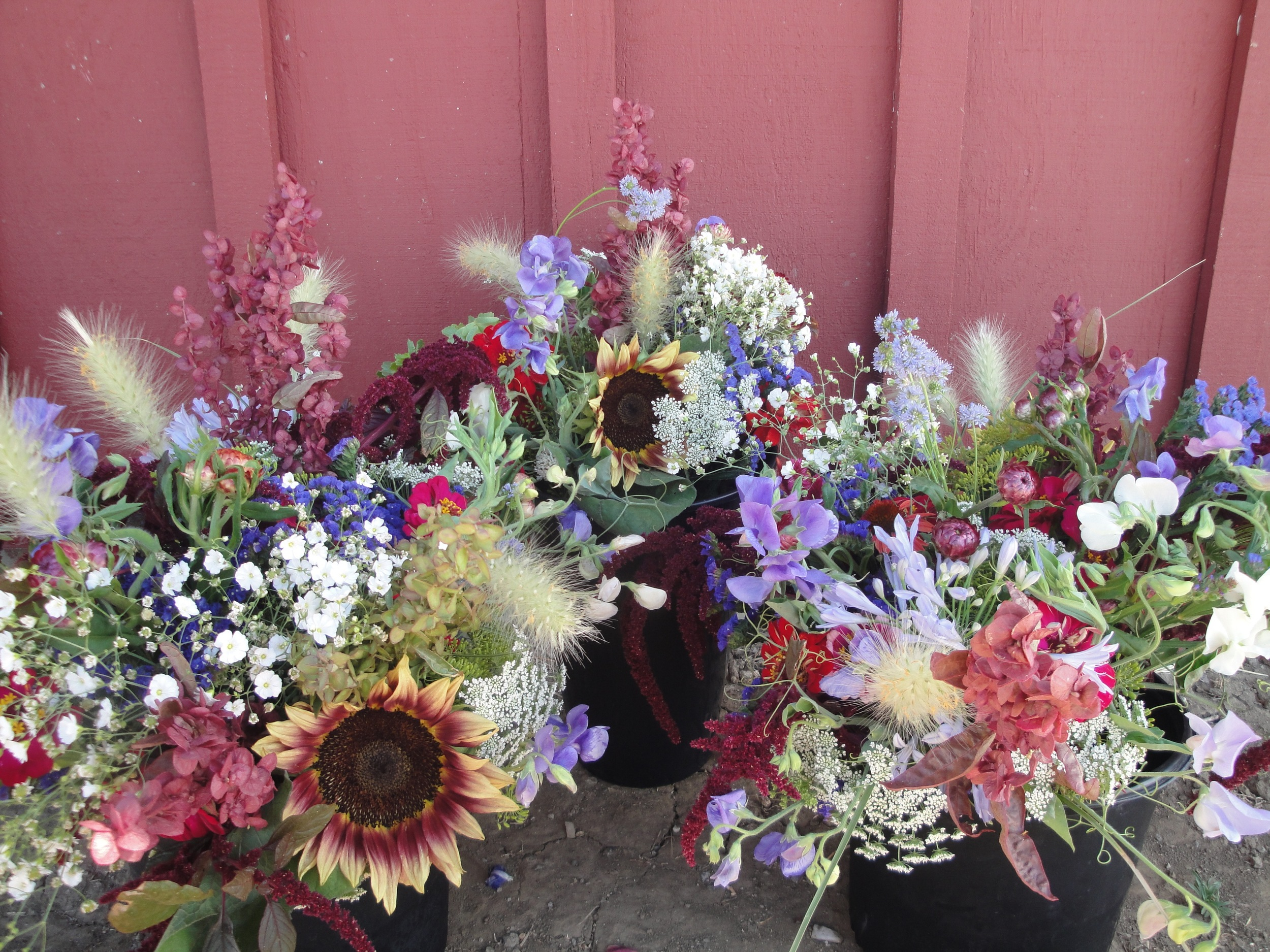 My Flower CSA subscribers got red, white, and blue bouquets this week in honor of American Flowers Week.