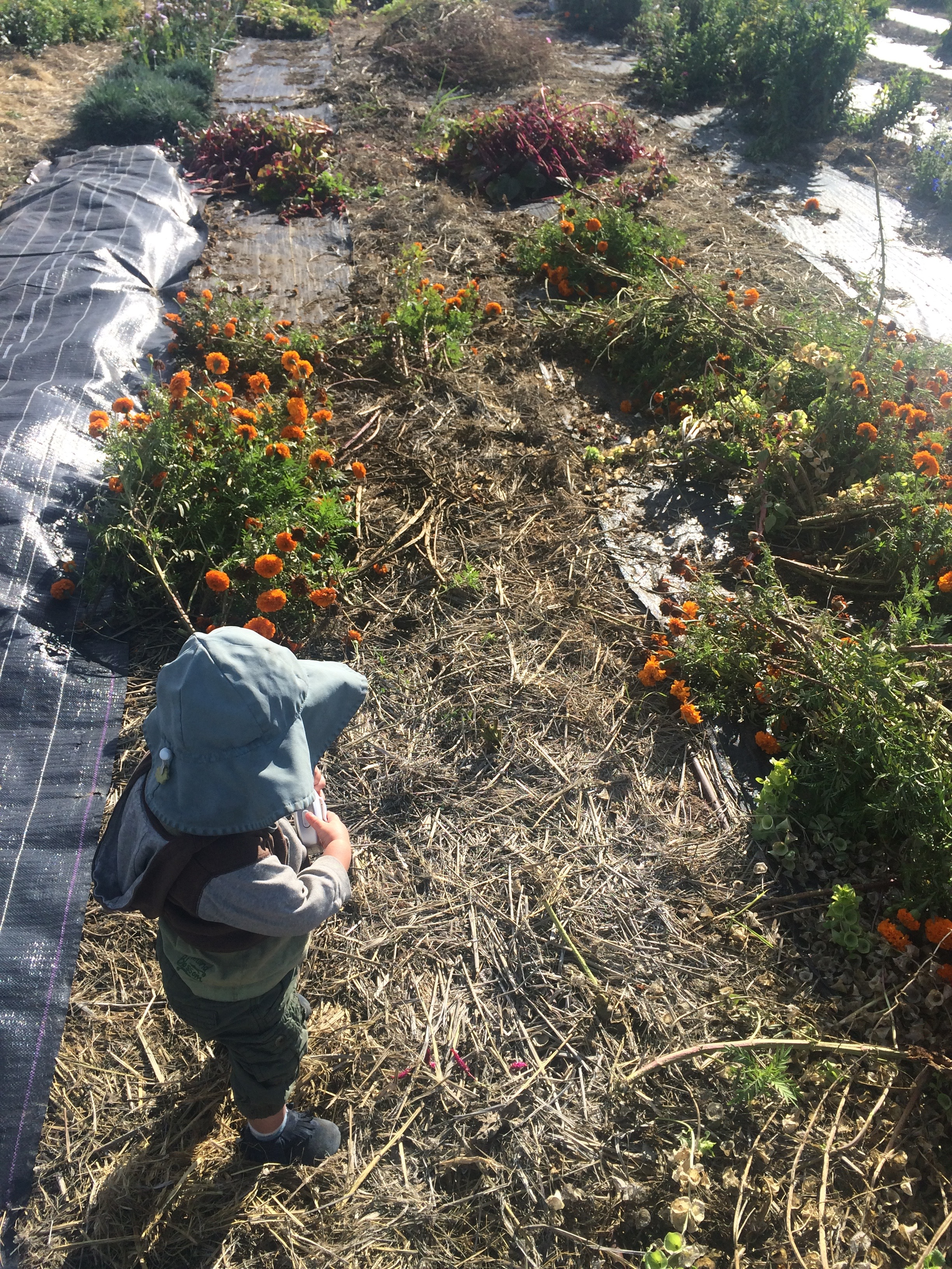 Nalin, my little farm boy, and the piles of spent cosmos, marigolds, celosia, and bells of Ireland