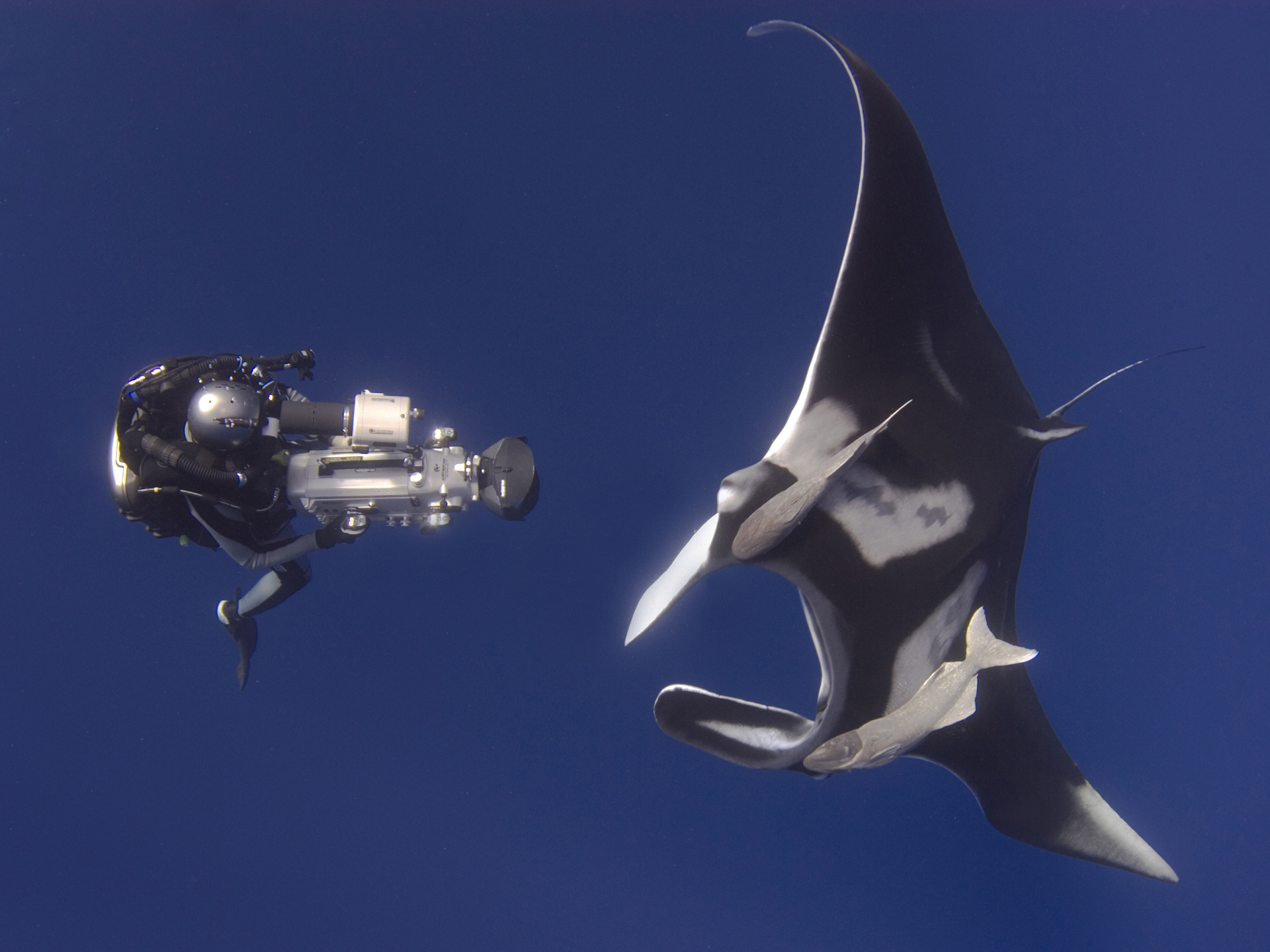 Tom, on closed circuit rebreather, filming a giant manta. Photo by Andrea Marshall