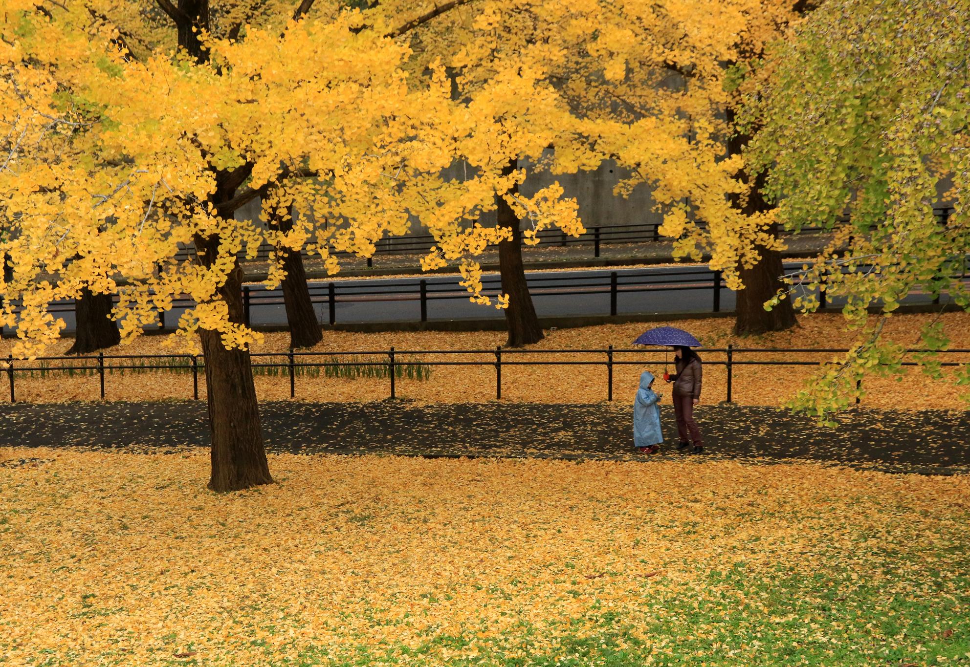 IMG_8468-2_第10回(公財)神奈川県公園協会 花とみどりのフォトコンテスト_入選_秋雨の小道.jpg