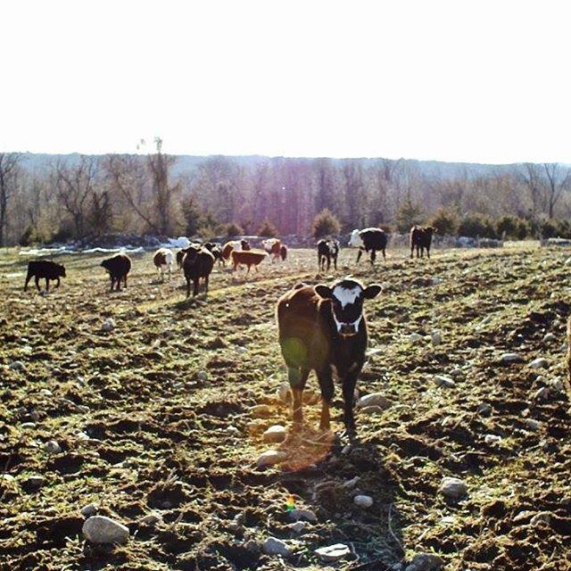 STONE GARDENS FARM